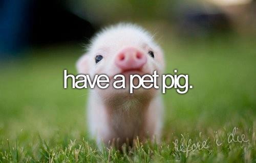 Have A Pet Pig